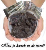 handcup_kweek